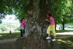 In den Bäumen