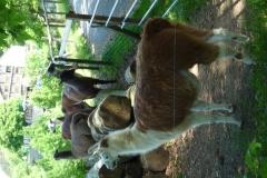 Auch Lamas sind dabei